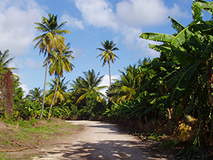 Fig Tree Drive, Antigua