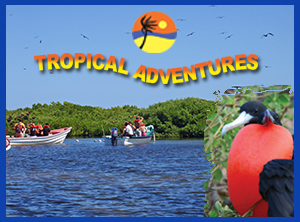 Frigate Bird Sanctuary Antigua